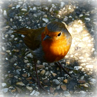 Introducing Master Robin | by Bob.W