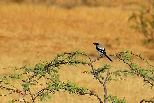 in the wilds of the deccan | by themargi