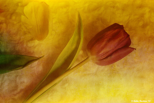 Tulip on texture | by Ankie Rusticus, I'm not much here