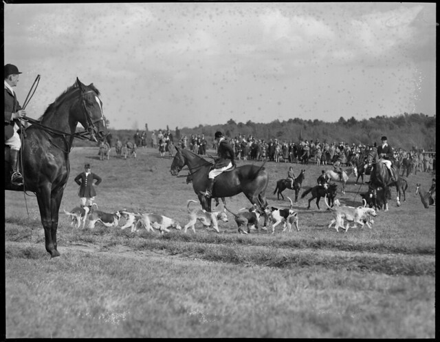 Dogs and riders gather on Bradeley Palmer's estate for Myopia Hunt