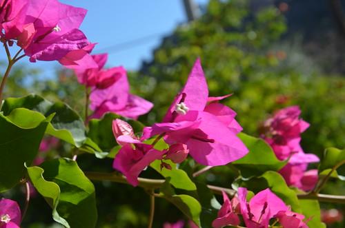 Von links oben nach rechts unten lila Blüten.