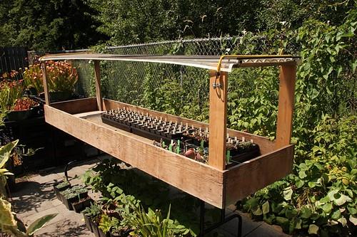 Garden 6-30-2016