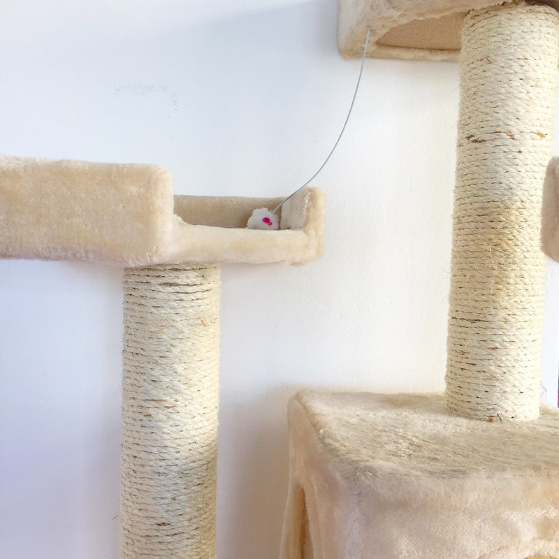 How to repair a scratching post like a real pro by Sintra The Cat