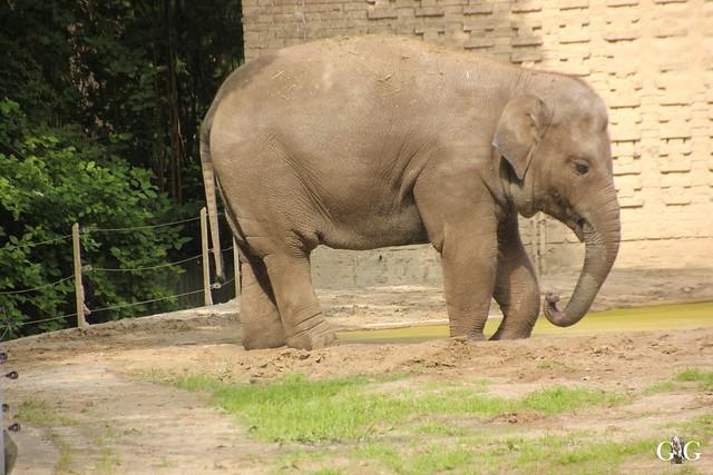 Sonntags-Besuch Zoo Berlin 19.06.20166