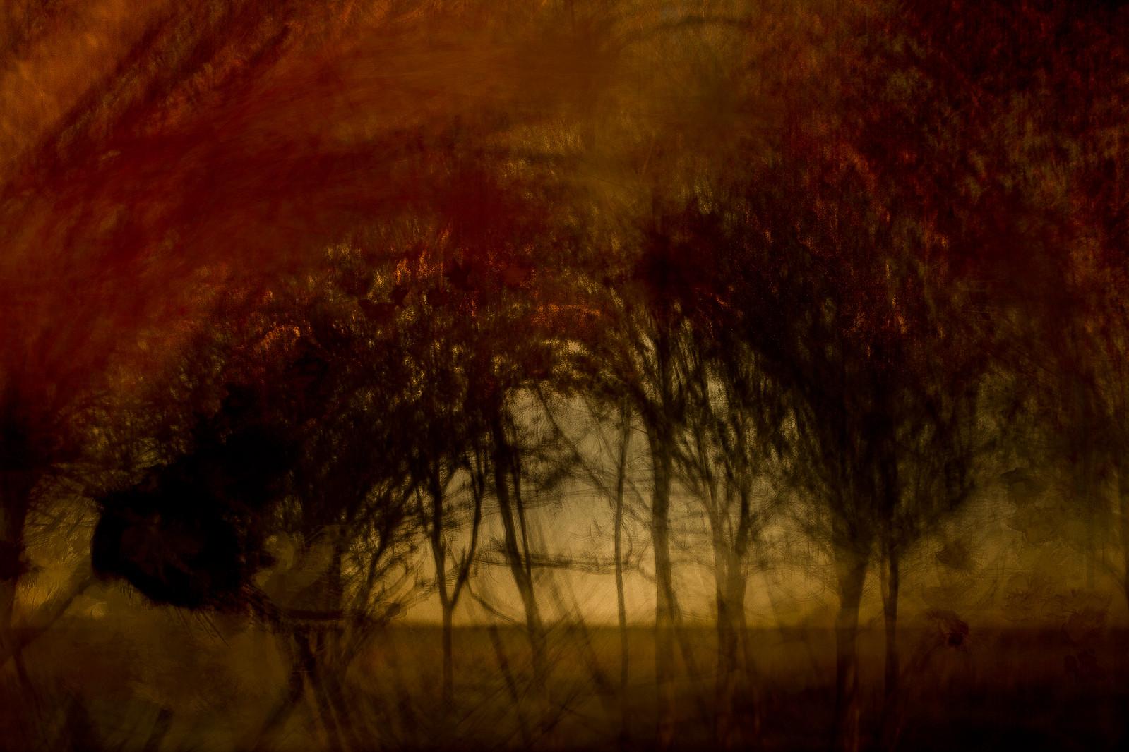 autumn #15   by chrisfriel