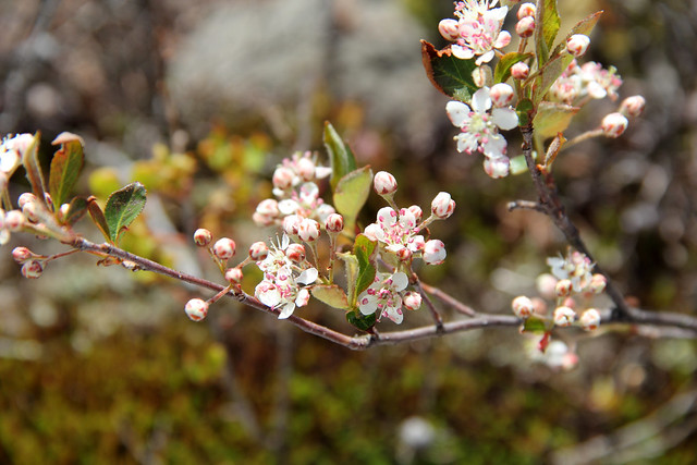 20160527_Dolly_Sods_130
