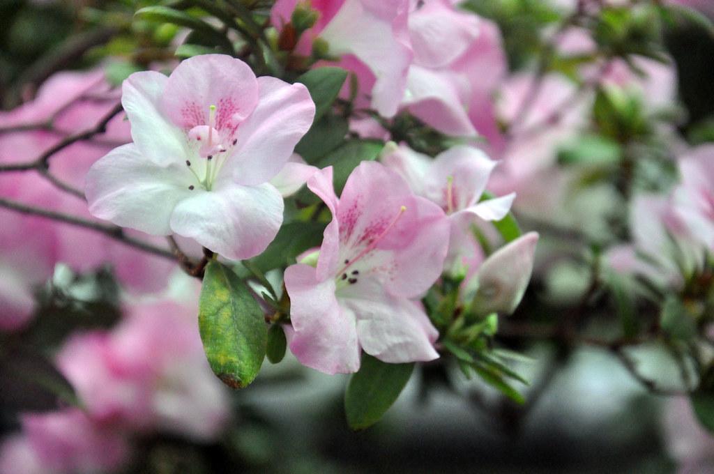 Ботанический сад DSC_0216