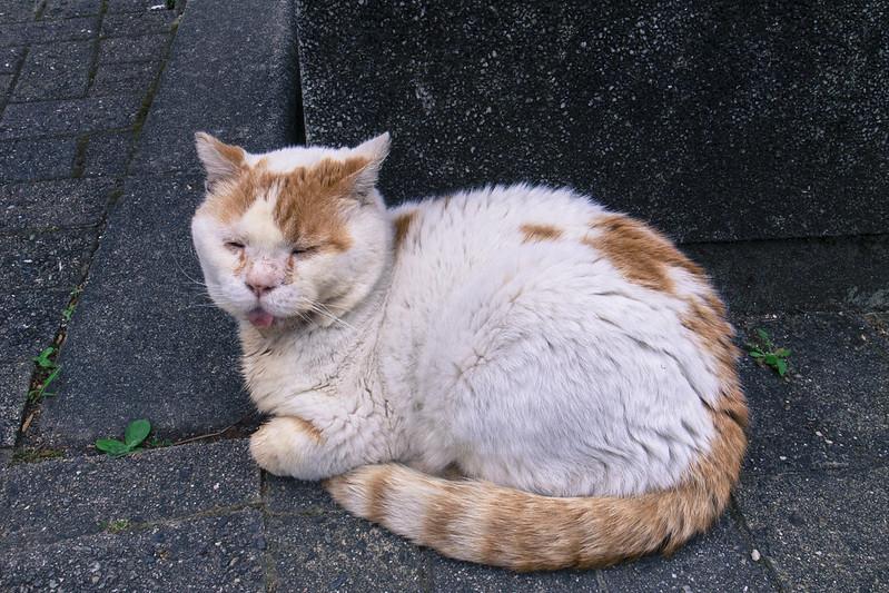 お猫様-20160516-3