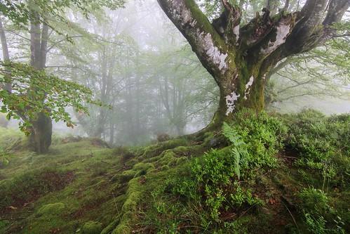 Parque Natural de #Gorbeia #Orozko #DePaseoConLarri #Flickr - -606