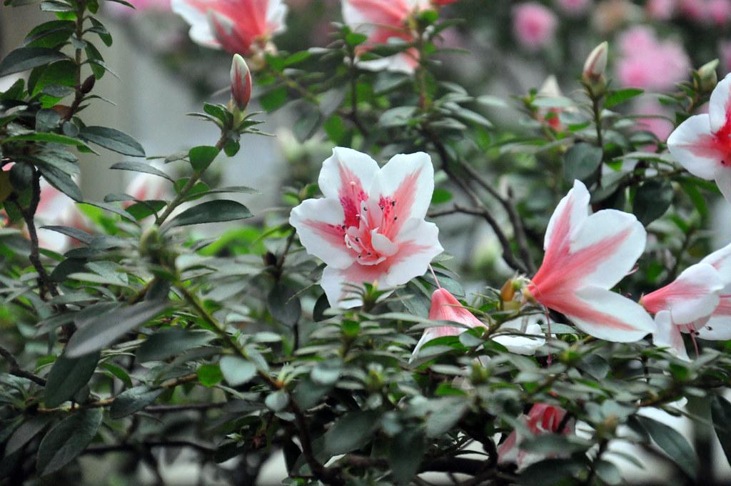 Ботанический сад DSC_0215