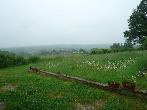Wet garden 1