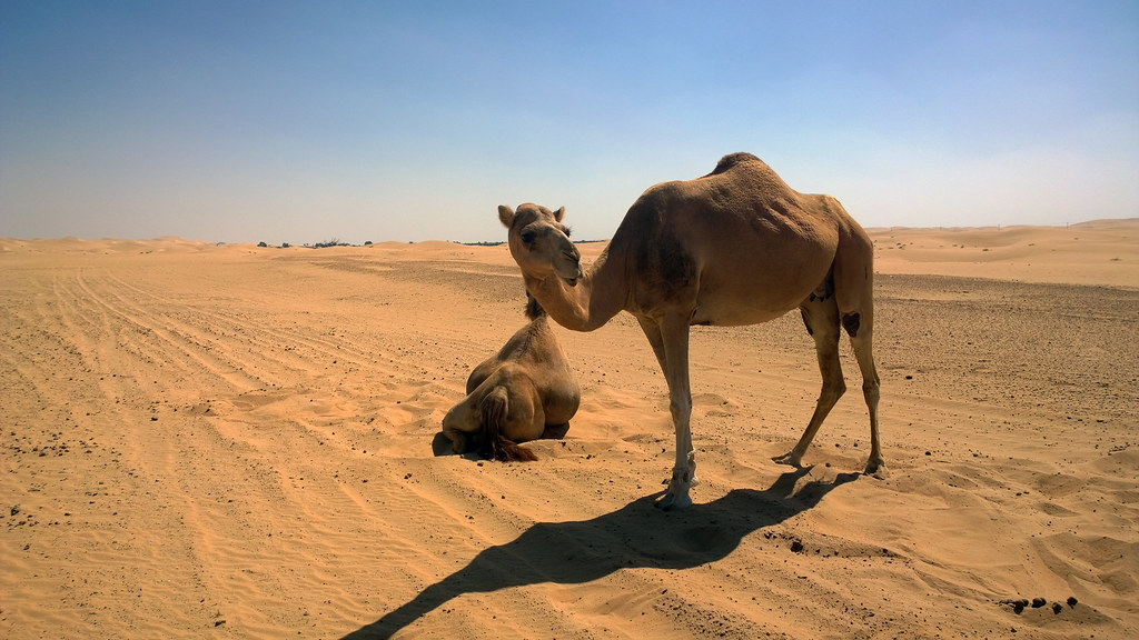 Desierto Abu Dhabi