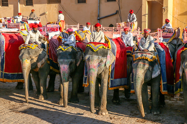 Drivers of elephant taxi in Amber Fort, Jaipur, India ジャイプール、アンベール城の「象のタクシー」