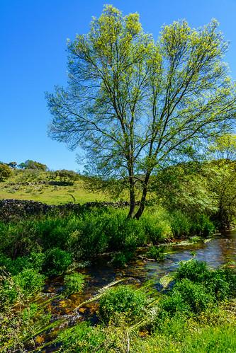 Hinojosa de Duero. Arroyo de Froya