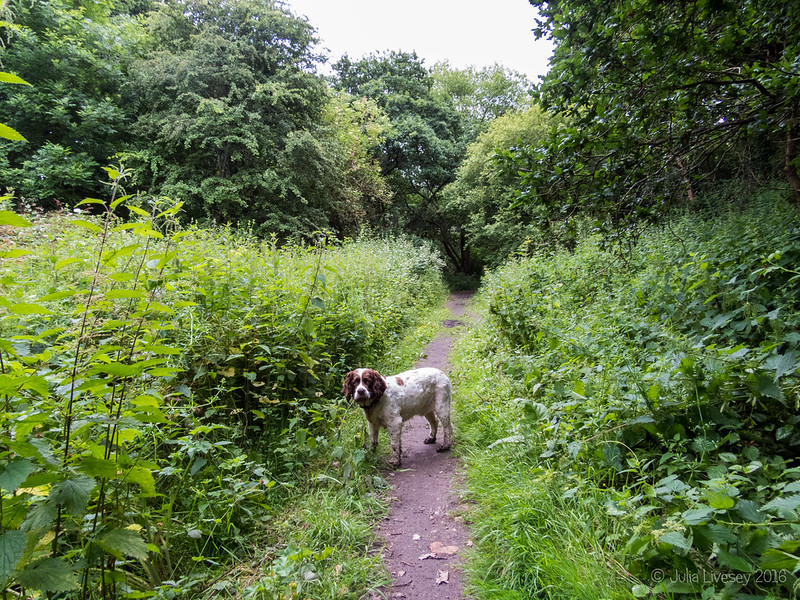 Heading for the old railway line