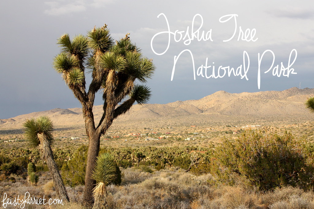 Joshua Tree NP_feistyharriet_May 2016 (20)