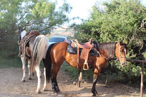 Texas Musical 061816 (83)