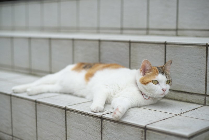 東京路地裏散歩 谷中のネコ 2016年6月25日