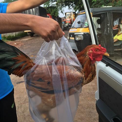 chicken in a bag!