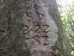Tree Graffiti from 82