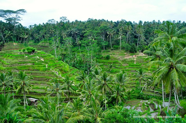 The View of Tegalalang Rice Terraces in Ubud