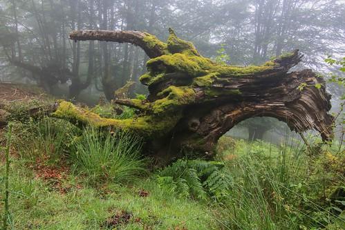 Parque Natural de #Gorbeia #Orozko #DePaseoConLarri #Flickr - -609