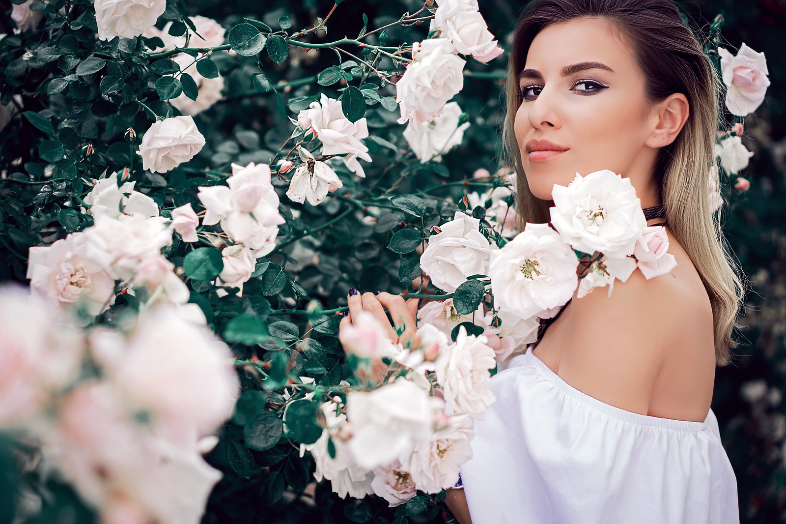 Roses16