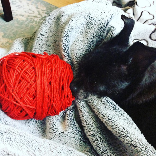Just a few rows to finish this cardigan and a few snuggles before I get my Sunday started 😍🐶 #knittersofinstagram #cherstagrams #dwjknits
