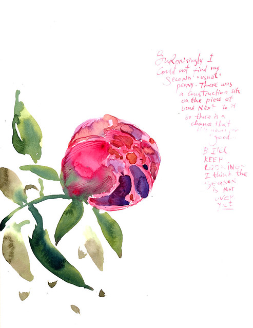 Sketchbook #97: Peonies