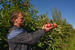 Apple farming is the main agriculture activity in Prespa | by UNDP in Europe and Central Asia