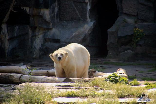 Tierpark Berlin 29.05.2016   03
