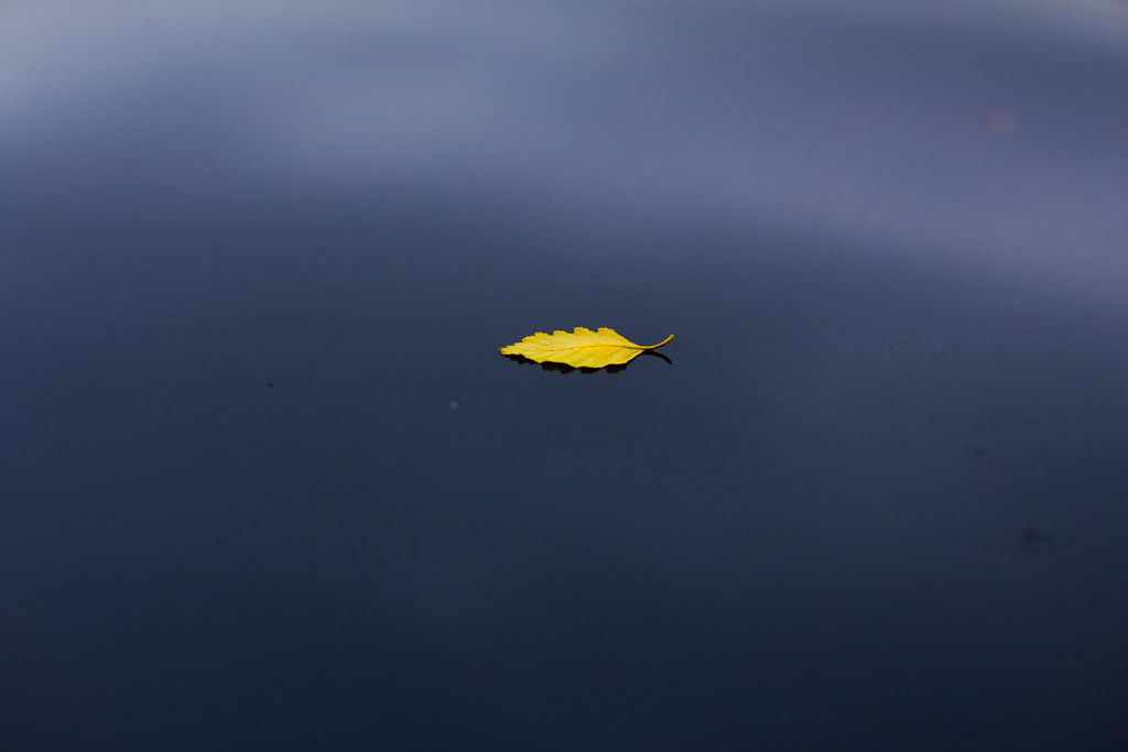 yellow leaf, black roof