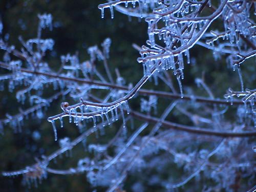 December ice (02)