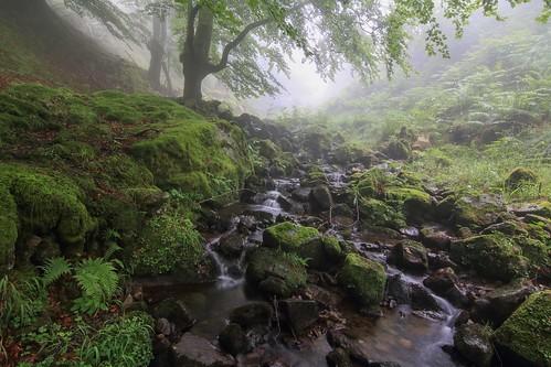 Parque Natural de #Gorbeia #Orozko #DePaseoConLarri #Flickr - -623