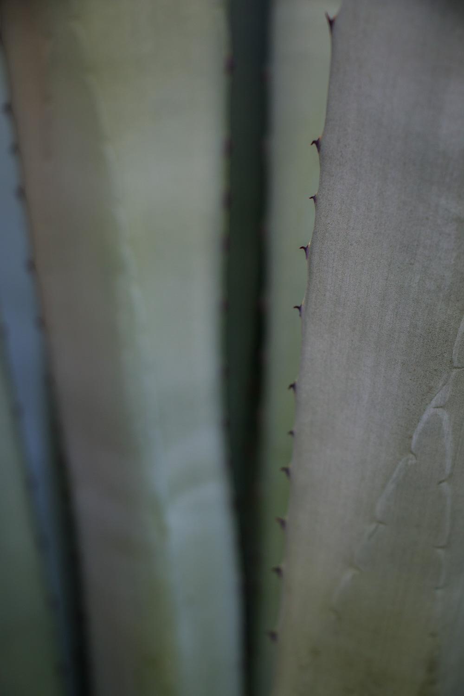 mallorca | lili weissensteiner