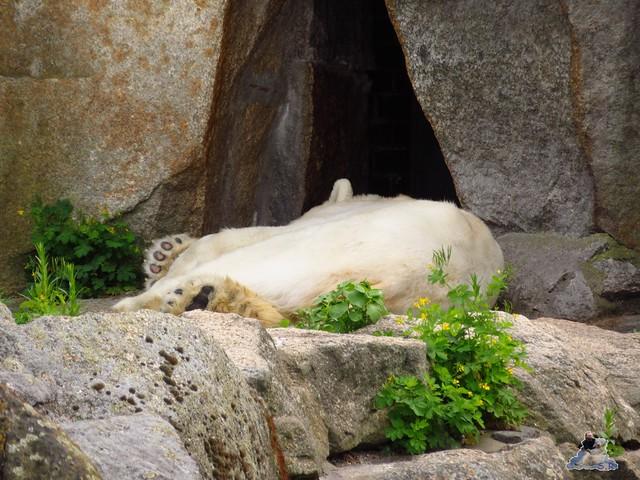 Zoo Berlin 27.05.2016   036