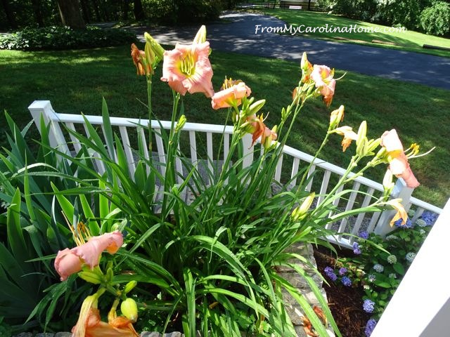 June in the Garden 2016 ~ From My Carolina Home