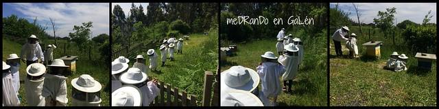 apicultura3