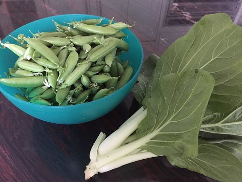 harvest IMG_6575