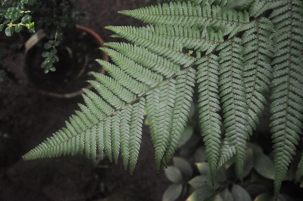 Ботанический сад DSC_0058