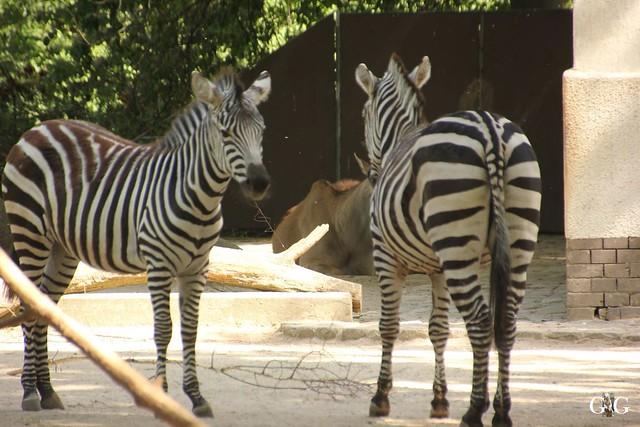 Besuch Zoo Berlin 22.05.1620