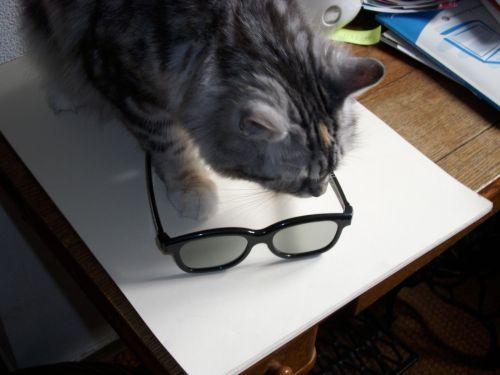 katzemitbrille
