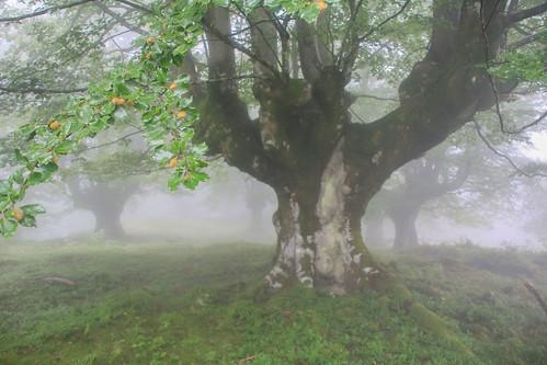 Parque Natural de #Gorbeia #Orozko #DePaseoConLarri #Flickr - -632