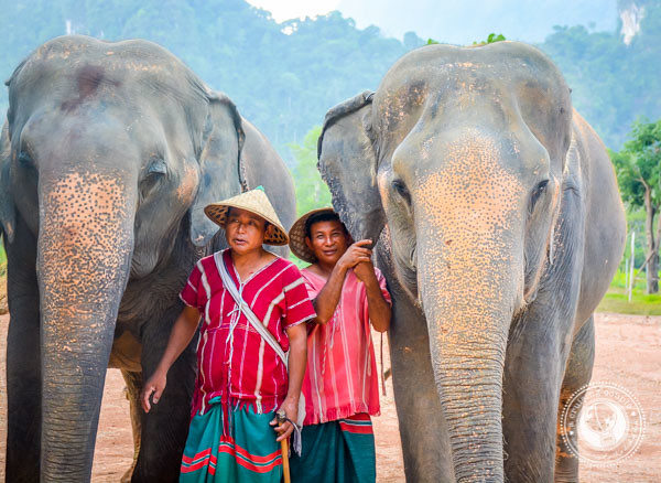 Mahouts and Elephant in Thailand