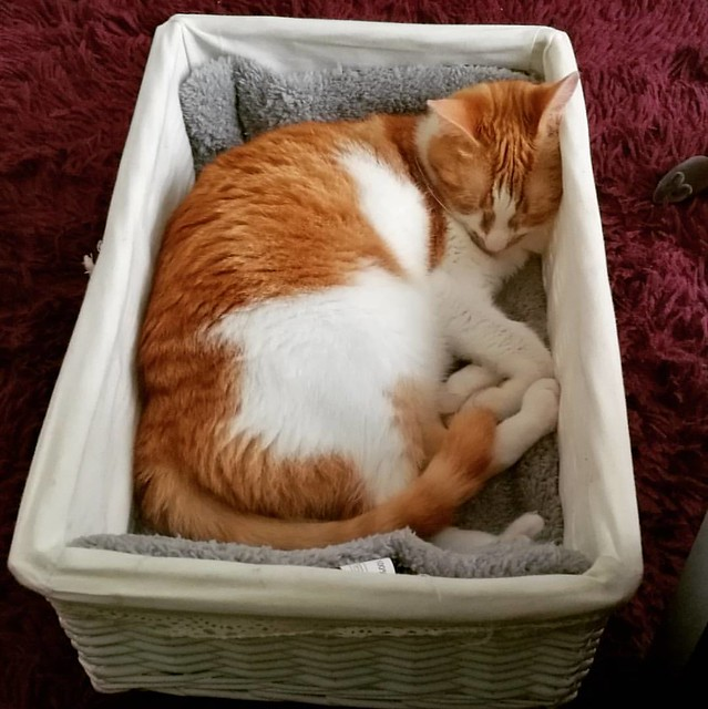 This little cutie got spoiled yesterday with a lot of goodies, toys and food in this basket from family. Turns out she likes the basket the most 😃 #meeshaisawesome #meeshathecat #meesha #catsareawesome #catsofinstagram #catsofig #catstagram