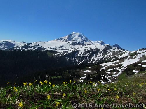 Glacier lilies along Skyline Divide, Mount Baker-Snoqualmie National Forest, Washington