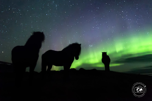 Aurora e cavalli