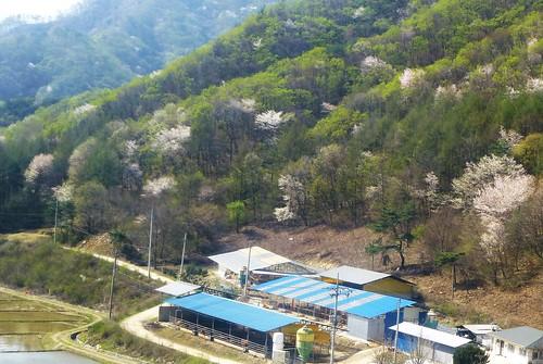 c16-Chuncheon-Gangneung-route (18)