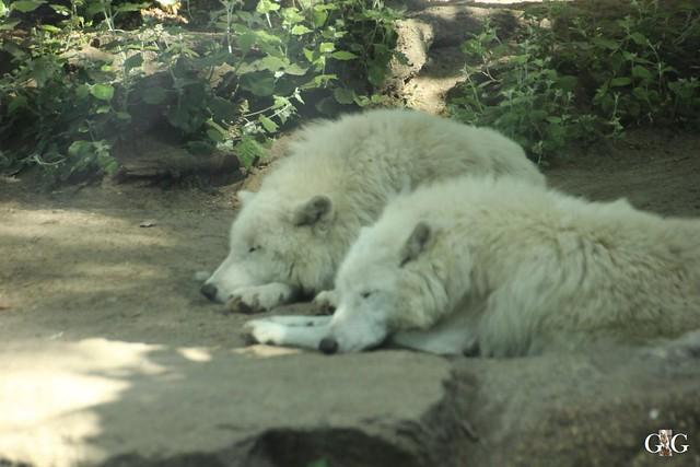 Besuch Zoo Berlin 22.05.164