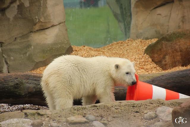 Besuch Zoo am Meer 25.06.201618